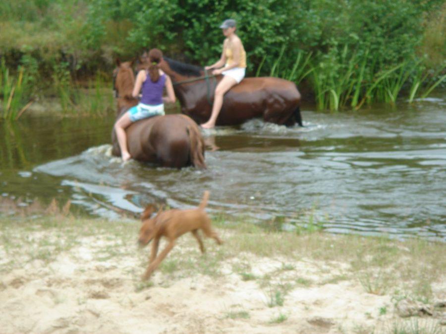 Kąpiel z końmi
