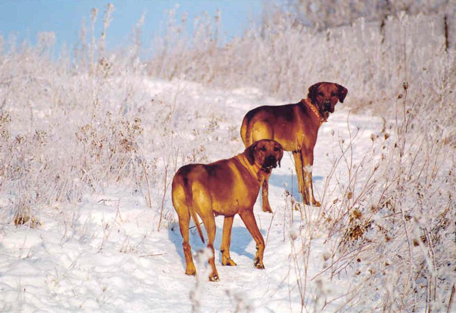 Duma i Epir - Boze Narodzenie 2002