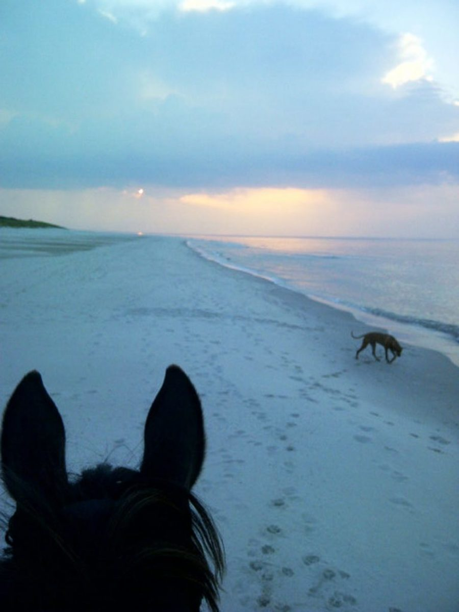 Eden i psy na plazy wieczorem