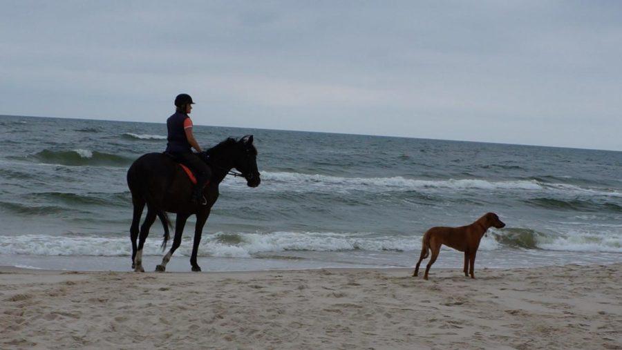plaża 8