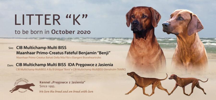 pregowce_litter-k-announcement2020-09_webtop (002)